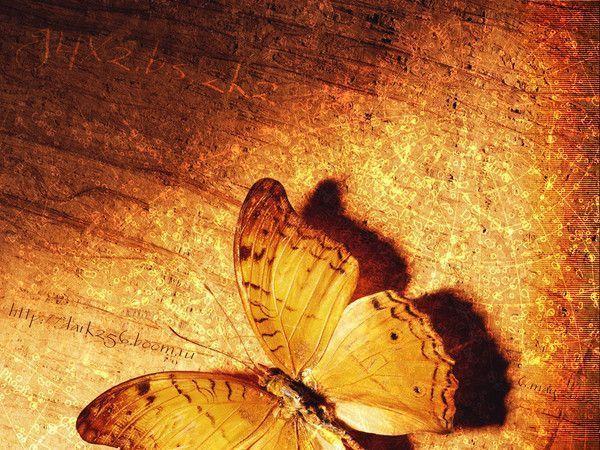 fond d'ecran papillon