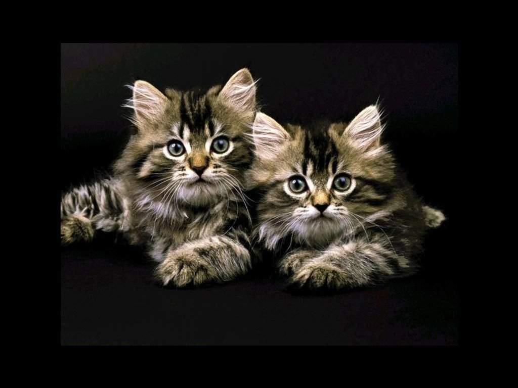 chats fond d écran