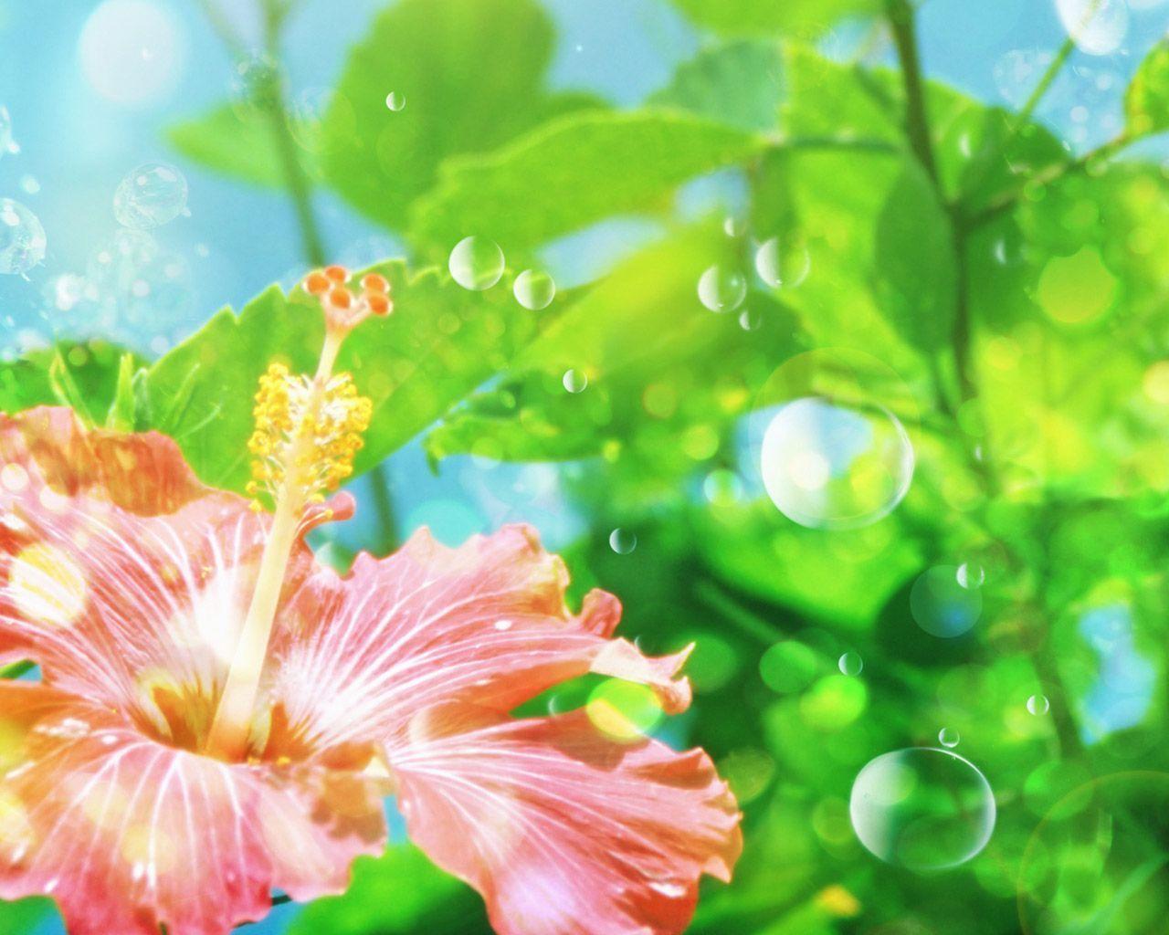 fond d ecran fleurs page 2