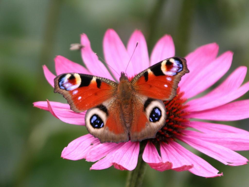Fond d ecran papillon page 2 for Fond ecran papillon